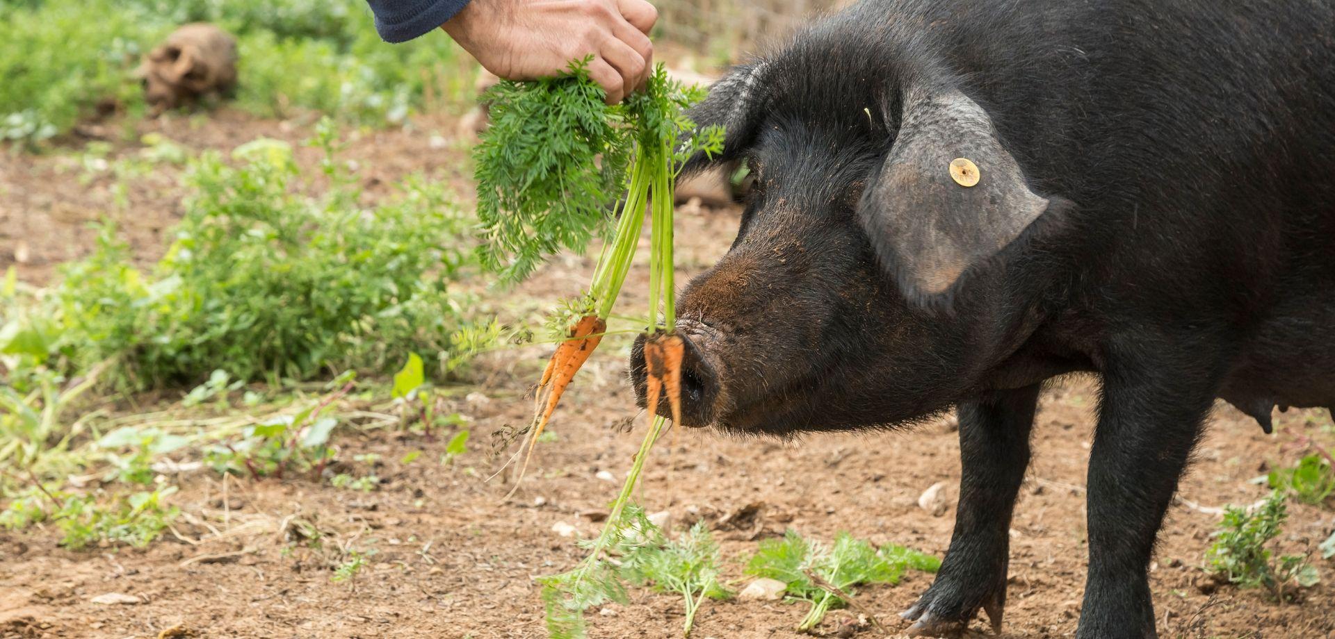 Agricoltura biodinamica cos'è?