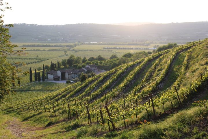 azienda agricola vino olio veneto