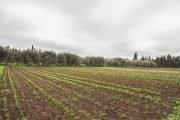raccolta olive periodo