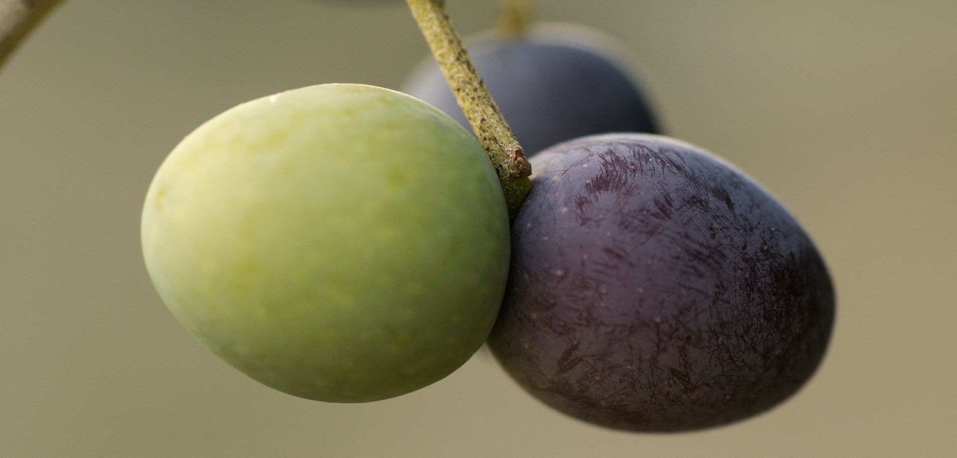 Olio Seggiano DOP e Cucina Toscana
