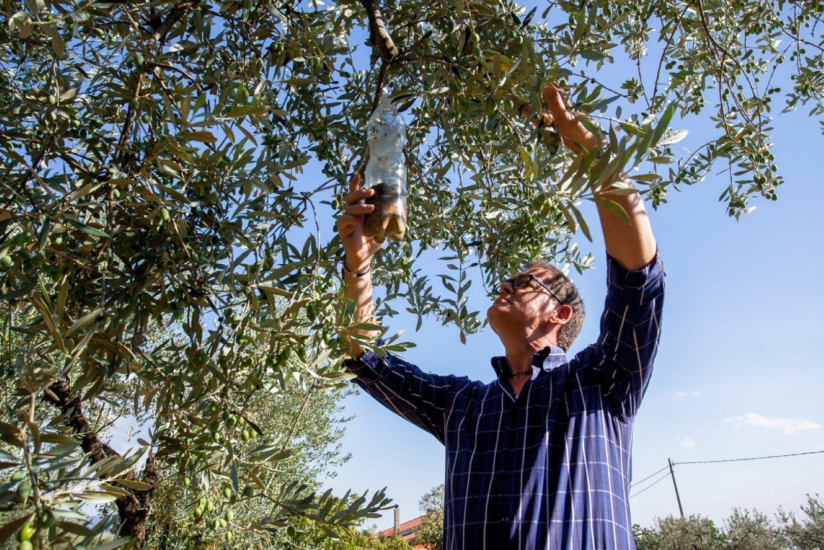 tecniche di agricoltura biologica
