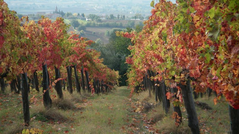 vino sagrantino di montefalco prezzo