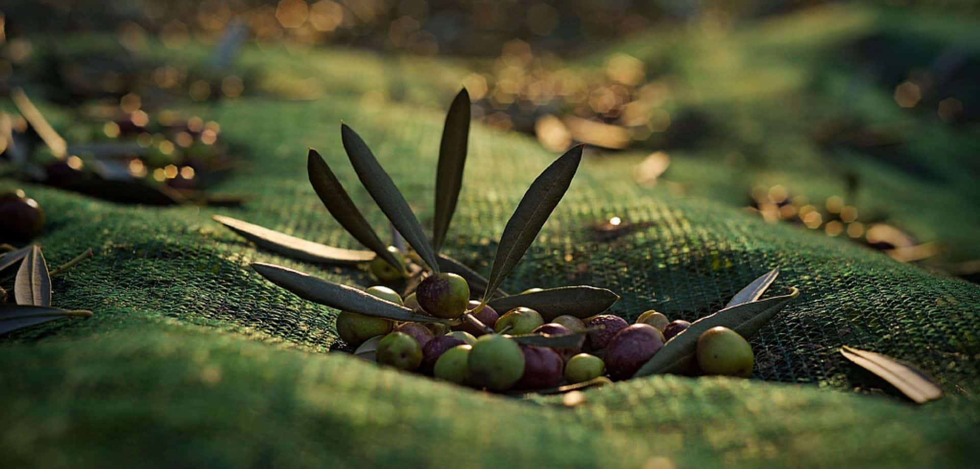 In Seggiano, ancient flavours and olive oil