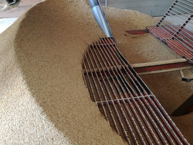 riso italiano: lavorazione in risaia