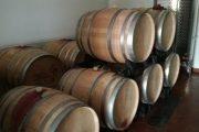 aziende vinicole avellino