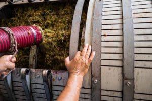 italian food and wine: food ambassadors