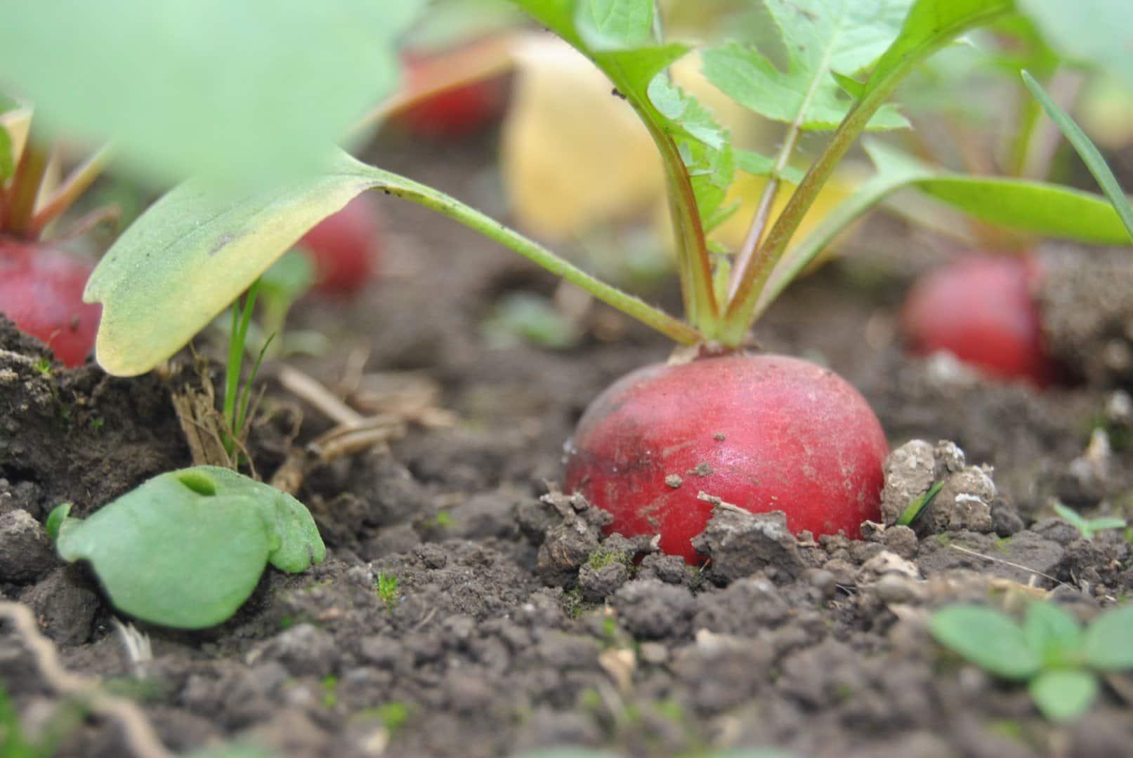 Agricoltura biologica in fattoria