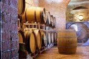 biodinamico vino