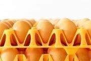 uova allevate a terra
