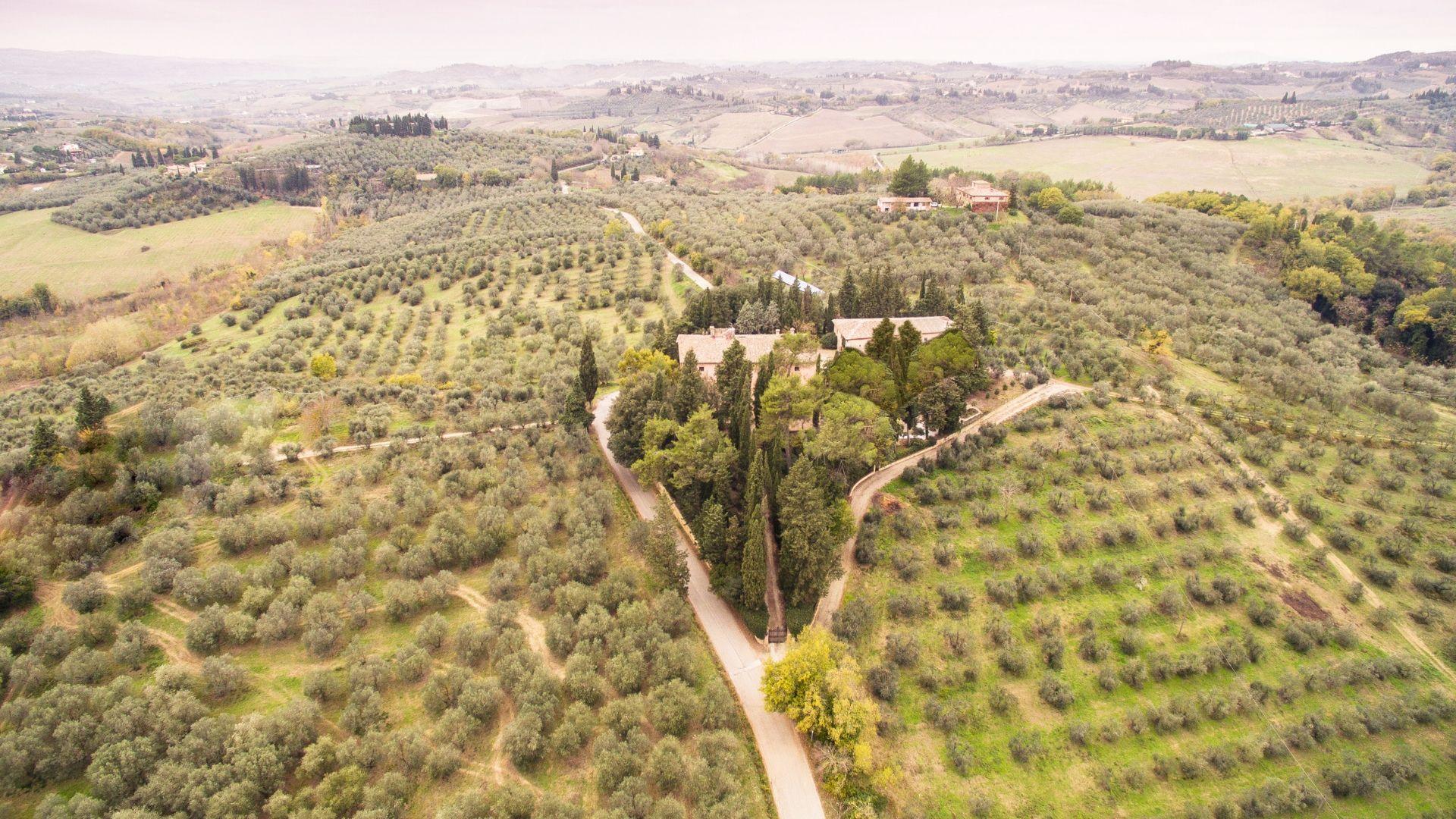 Olio extravergine, l'oro di Toscana