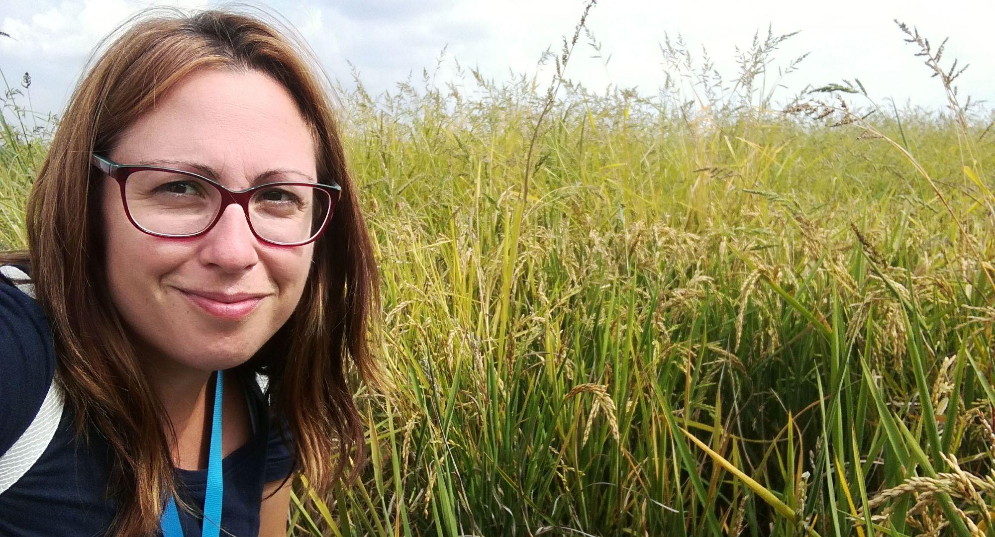 il risotto: come nasce nelle risaie del Piemonte