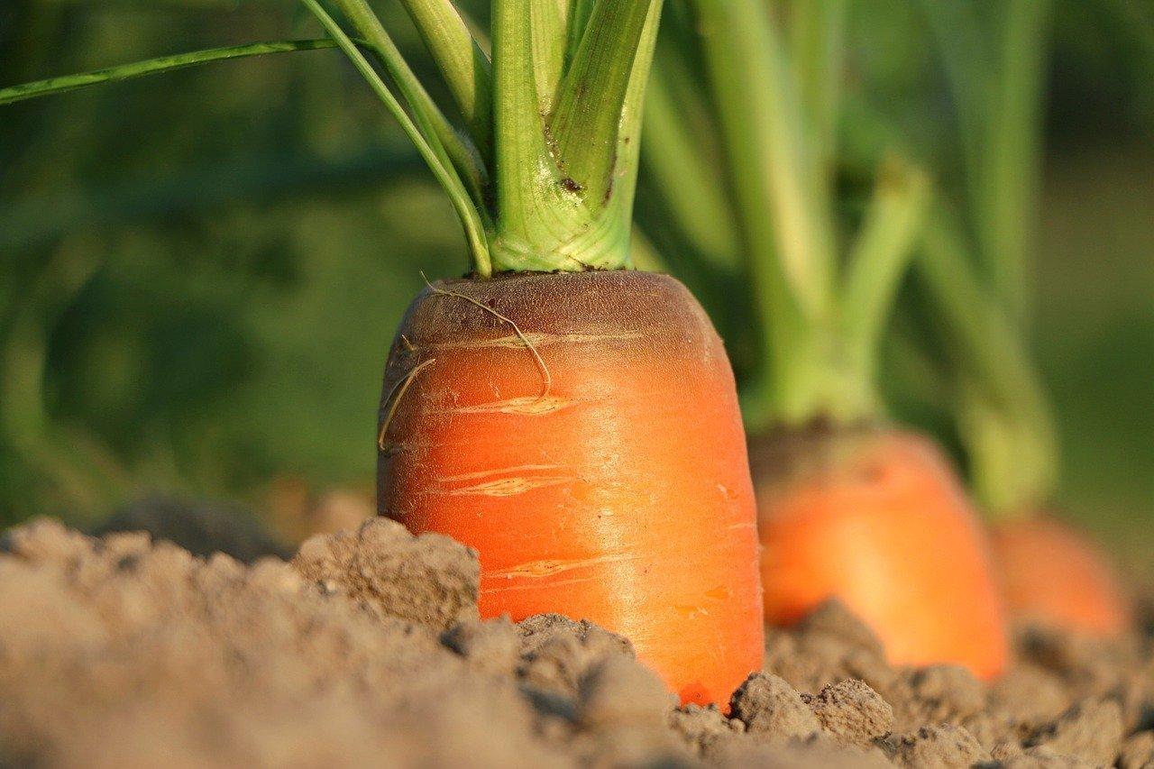 riso e carote
