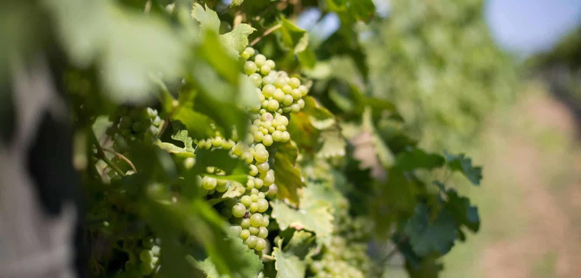 Degustare vini laziali sul Lago di Bracciano