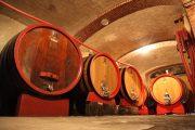 degustazione vino langhe