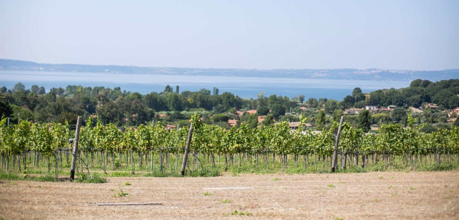 Vini e formaggi sul Lago di Bracciano