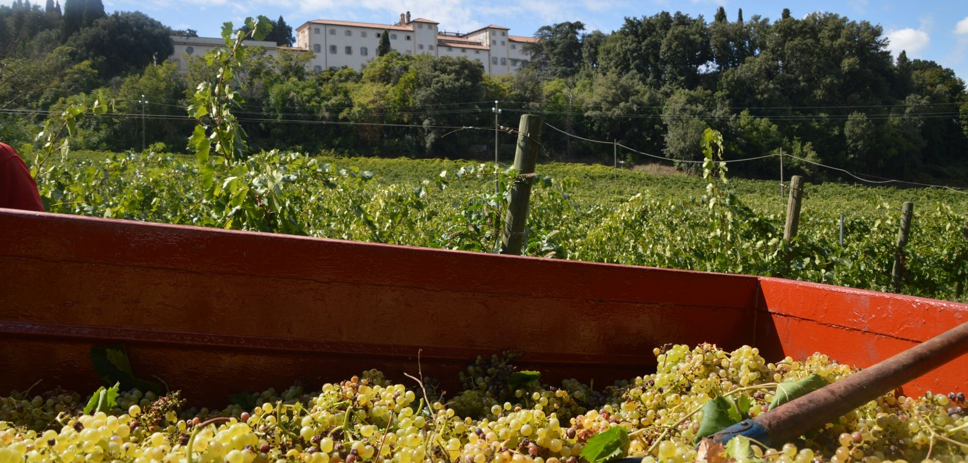 Vini del Lazio: degustare vini a Frascati