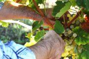 vini del lazio tour con degustazione