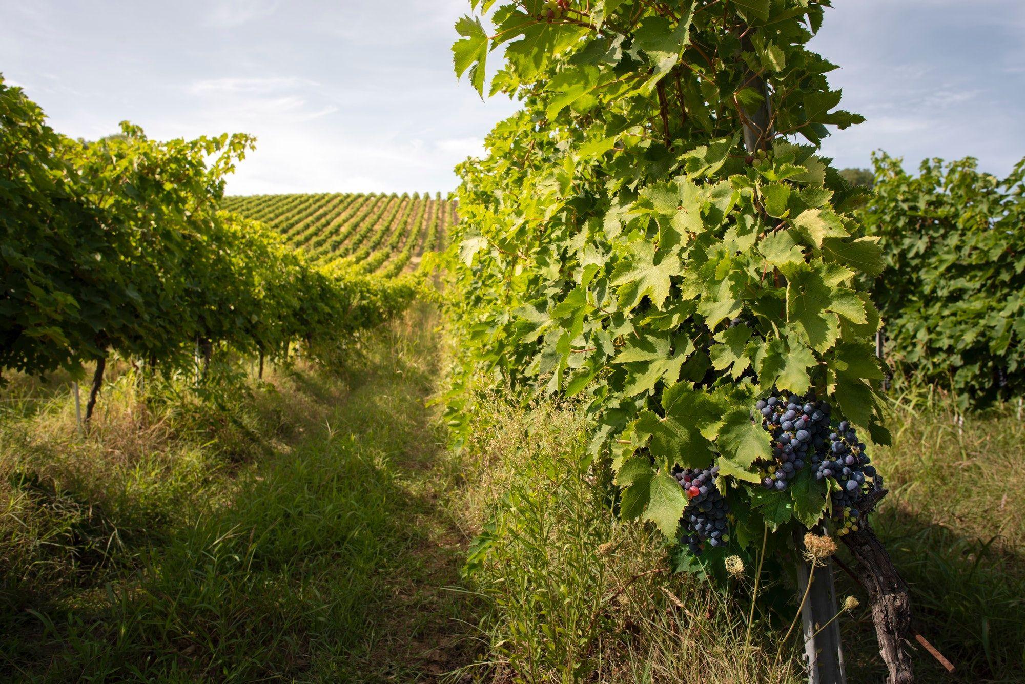 the best italian wines