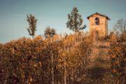 vini monferrato
