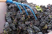 noto vino rosso siciliano