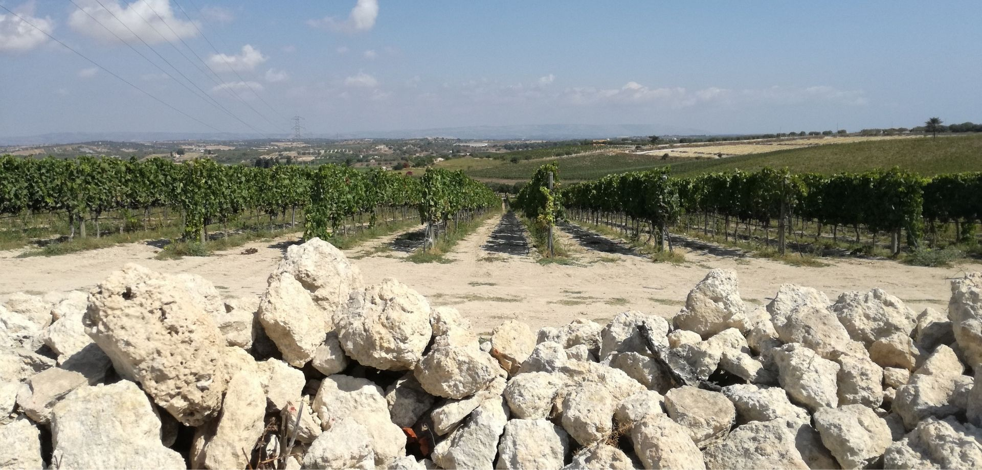 Assaggia pregiati vini naturali in Sicilia