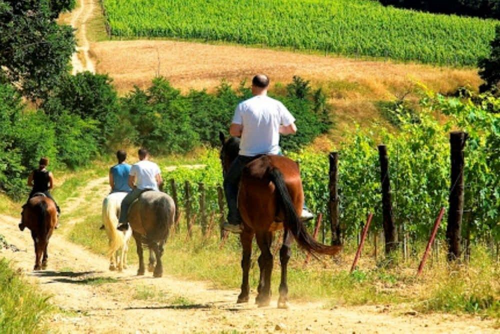 passeggiate a cavallo tra i vigneti