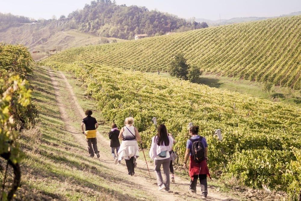 trekking nei vigneti montepulciano